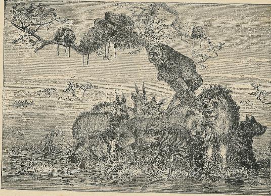 Animals - David Livingstone's Travels